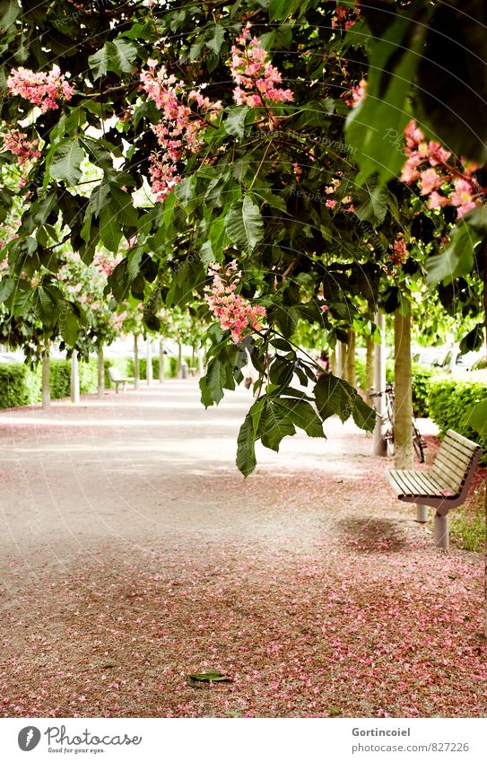 flex Spring Beautiful weather Tree Blossom Park Green Pink Blossoming Park bench book cover Think Colour photo Exterior shot Copy Space bottom Day Sunlight