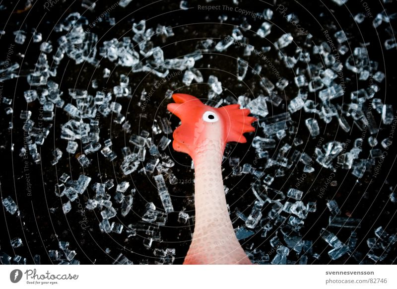 Live from Brokechick Mountain! Rubber hen Rooster Barn fowl Cold Gooseflesh Freeze Thin Food Toys Animal Nutrition Replication Rubber toy animal Downtown Berlin