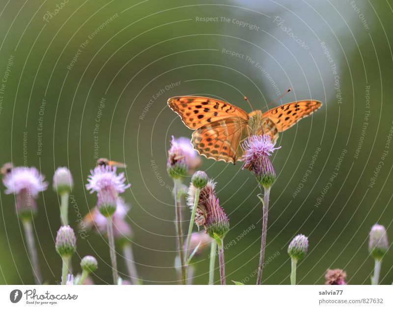 midday meal Sun Environment Nature Plant Animal Sunlight Summer Blossom Wild plant Wild animal Fly Butterfly 3 Blossoming Fragrance Delicious Beautiful Sweet