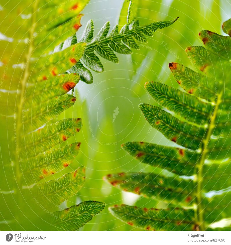 fern Nature Plant Growth Fern leaf structure Forest Leaf canopy Sunlight Green Colour photo Macro (Extreme close-up) Shallow depth of field
