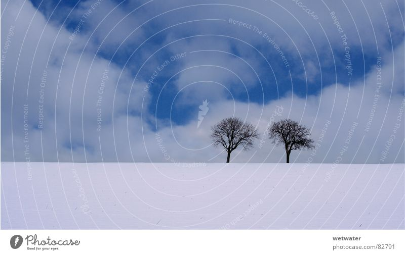 two trees (cold) Cold Tree Sky Clouds Loneliness Germany Winter Fresh Ice Blue white snow landscape lonely