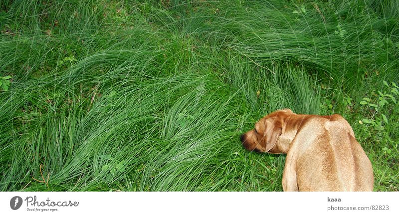 Green Animal Meadow Grass Dog Crazy Lawn Exceptional Obscure Pasture Whimsical Mammal Strange Plant Illogical Green space