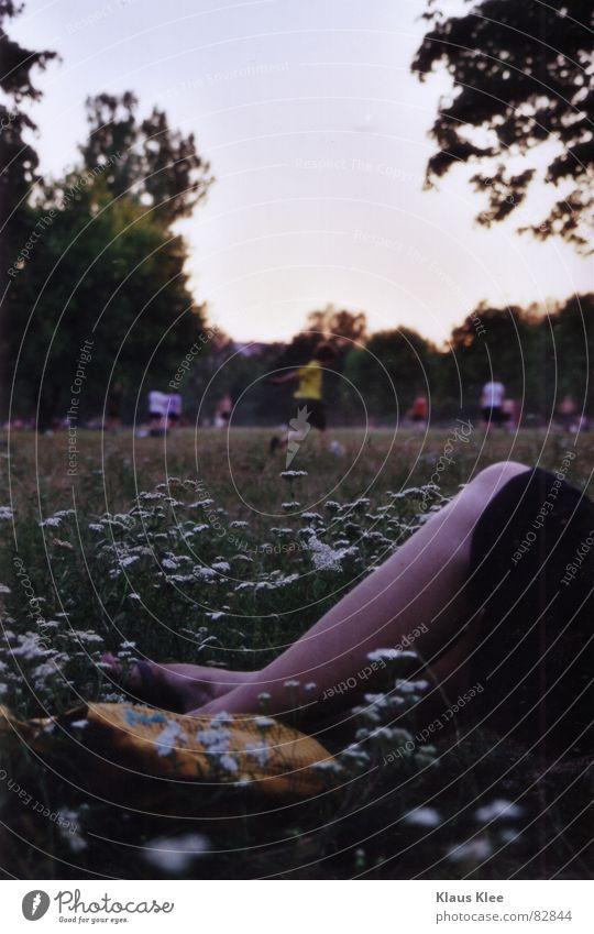 Flower Summer Meadow Park Legs Soccer Leisure and hobbies