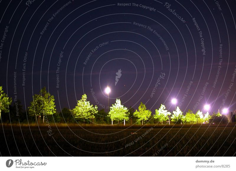night impressions Night Dark Tree Lantern Light Green Violet Long exposure Star (Symbol) Street
