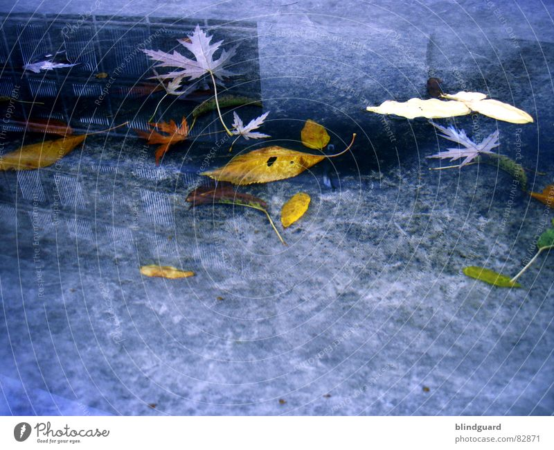 Water Leaf House (Residential Structure) Clouds Cold Autumn Wall (building) Death Window Gray Sadness Wall (barrier) Rain Wet Grief Gloomy