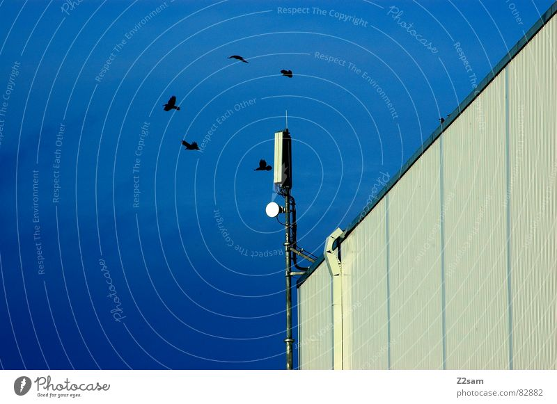 Sky Blue House (Residential Structure) Black Building Bird Flying Round 5 Geometry Antenna Graphic Circle Transmit Radio technology
