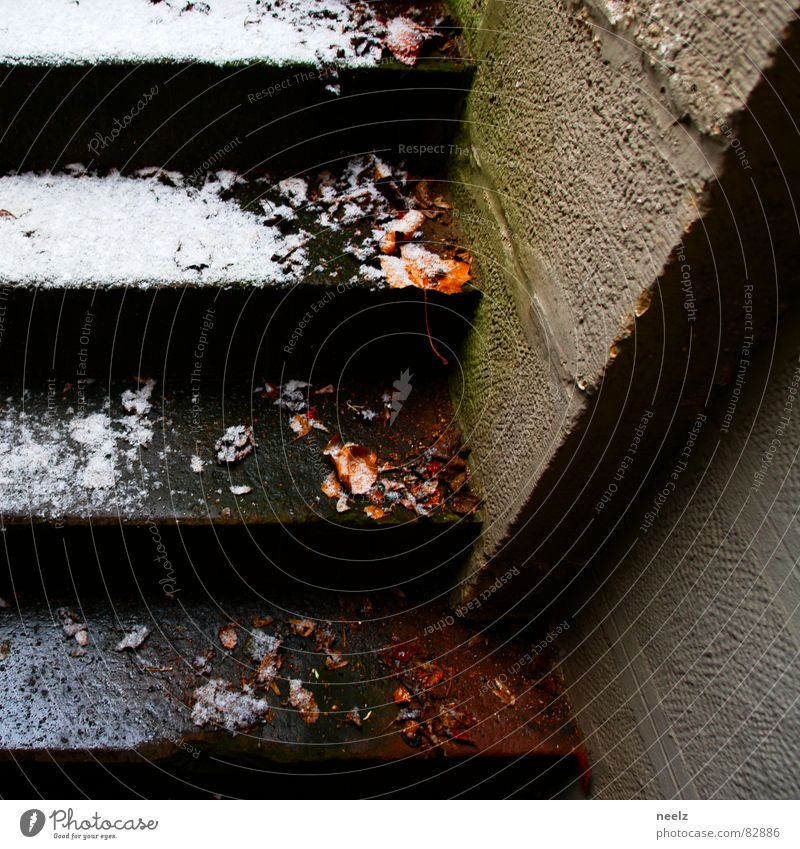 tender as a winter Wet Leaf Wall (building) Seasons Cold Damp Dank Wall (barrier) Fresh Winter Snow melt Go up Ice Stairs cool and humid Ladder Brook