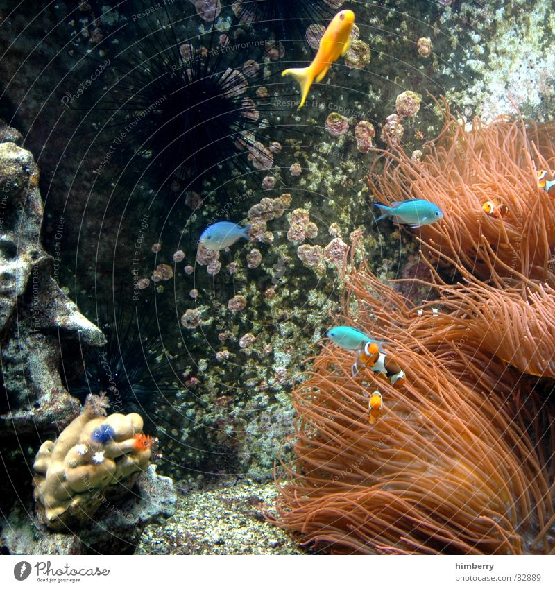 fishtank Fish Aquarium Water Coral Bottom of the sea Ocean