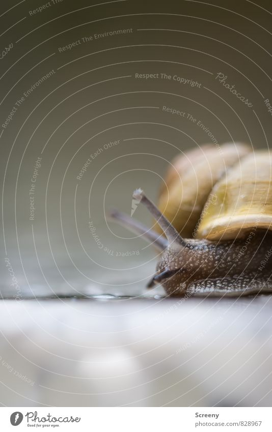 Nature Summer Calm Animal Yellow Eyes Movement Spring Small Brown Speed Serene Snail Crawl Patient Feeler