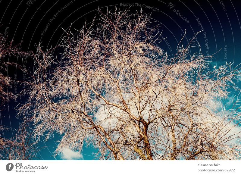 Nature Sky Tree Calm Cold Safety Multiple Protection Branch Many Safety (feeling of) Twig Eye-catcher Evidence