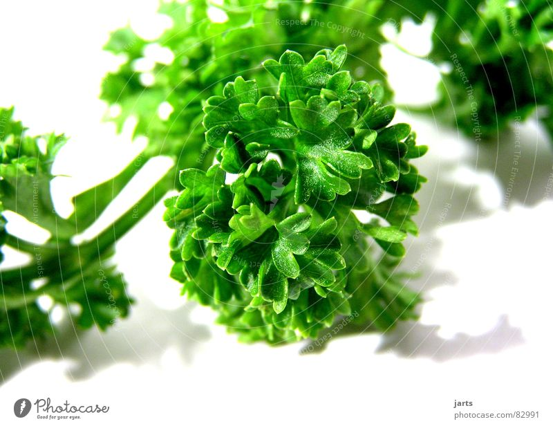 Green Nutrition Cooking & Baking Kitchen Decoration Gastronomy Herbs and spices Vegetable To enjoy Vegetarian diet Parsley Herb garden
