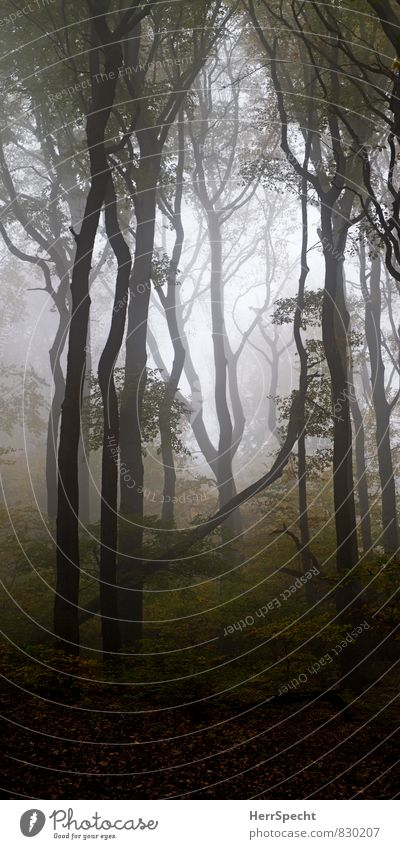 Nature Plant Beautiful Tree Loneliness Landscape Forest Environment Autumn Natural Gray Freedom Brown Fog Power Large
