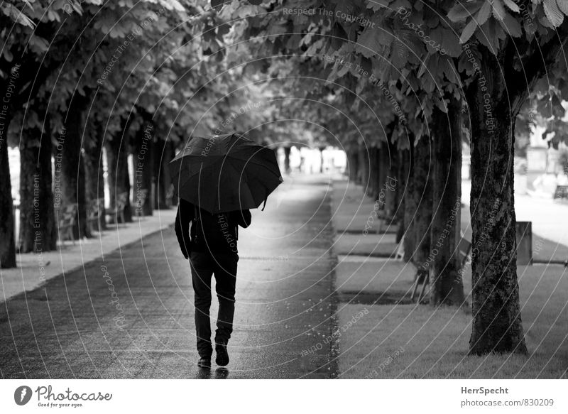summer rain Masculine Man Adults 1 Human being 30 - 45 years Bad weather Rain Tree Lucerne Going Cold Avenue Umbrella To go for a walk Lanes & trails
