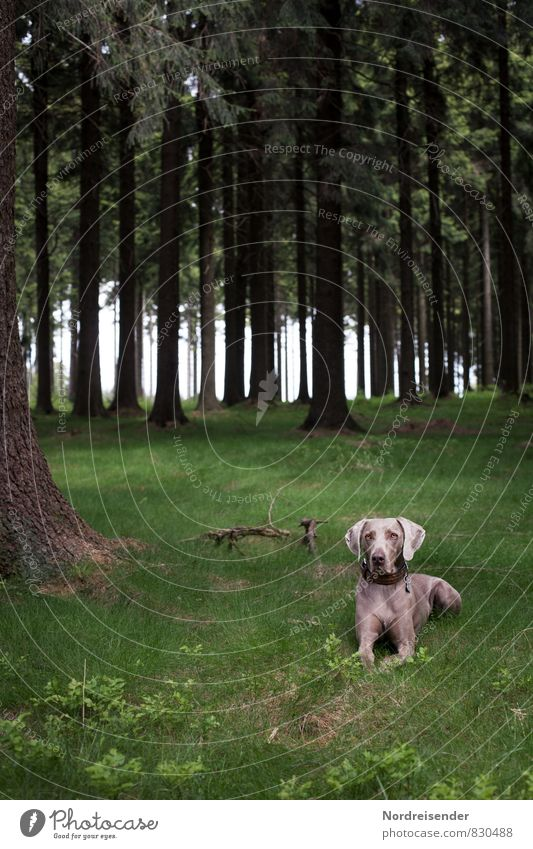 Dog Nature Summer Tree Relaxation Landscape Calm Animal Forest Life Meadow Healthy Wait Fresh Observe Friendliness