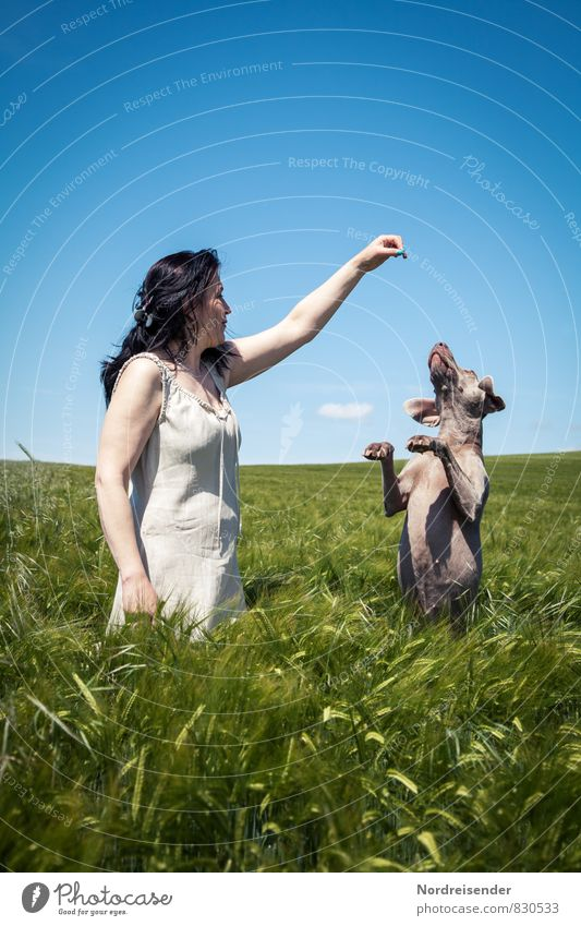 Dog Human being Woman Nature Summer Relaxation Landscape Joy Animal Adults Feminine Playing Field Lifestyle Happiness Beautiful weather