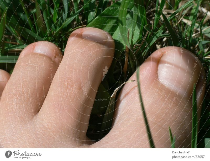 summer feeling Toes Grass Summer Joie de vivre (Vitality) Going Green Woman Joy Human being Detail Feet Skin Lawn Floor covering bare skin To enjoy warm season