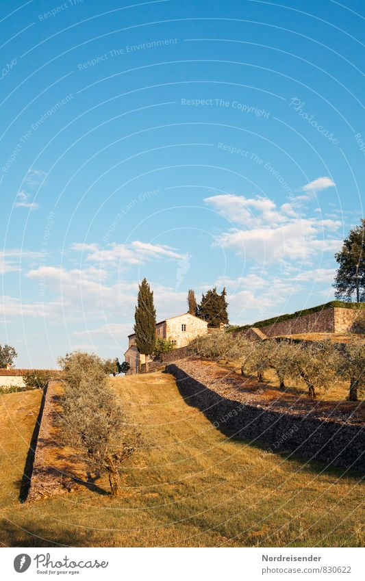 Tuscany Vacation & Travel Tourism Summer Nature Landscape Sky Clouds Climate Beautiful weather Tree Garden Village Small Town Outskirts