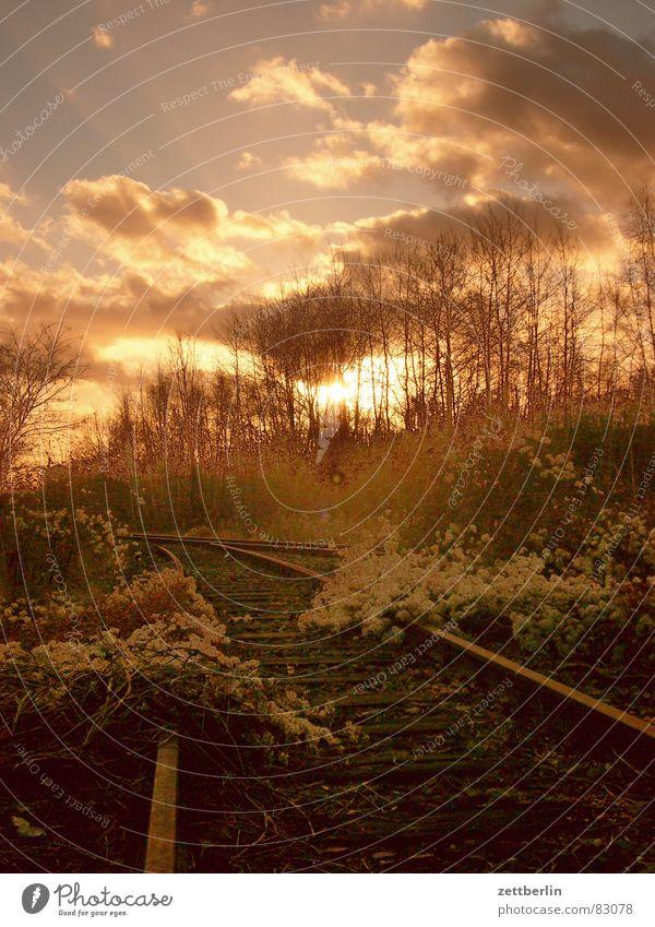 Sky Joy Clouds Forest Fear Gold Romance Bushes Railroad tracks Derelict Virgin forest Dusk Fairy tale Hedge Magic