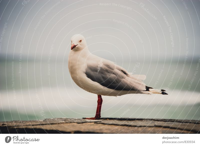 Beautiful White Summer Ocean Calm Joy Animal Environment Gray Exceptional Bird Authentic Esthetic To enjoy Beautiful weather Observe