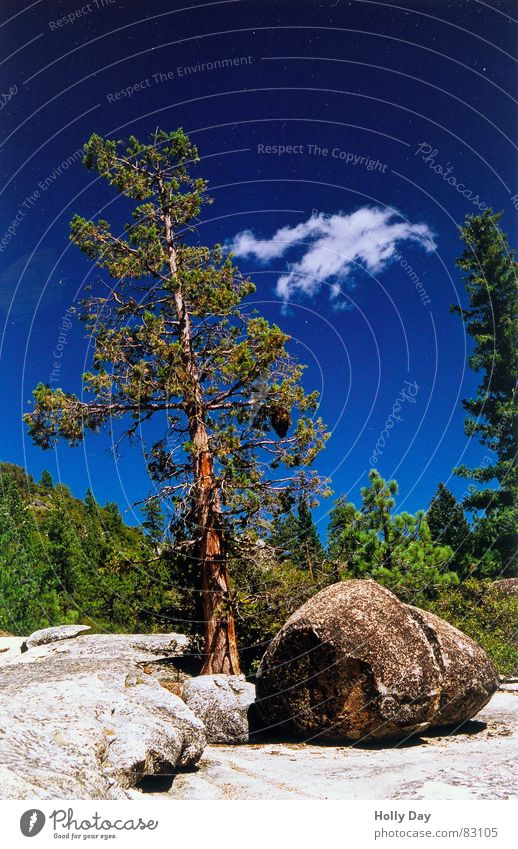 Nature Sky Tree Green Blue Summer Clouds Forest Relaxation Stone Rock USA Break Kitsch Tree trunk California