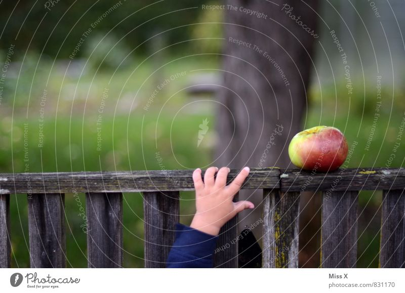 Human being Summer Hand Healthy Eating Emotions Autumn Garden Moody Food Fresh Baby Nutrition Fingers Sweet Delicious