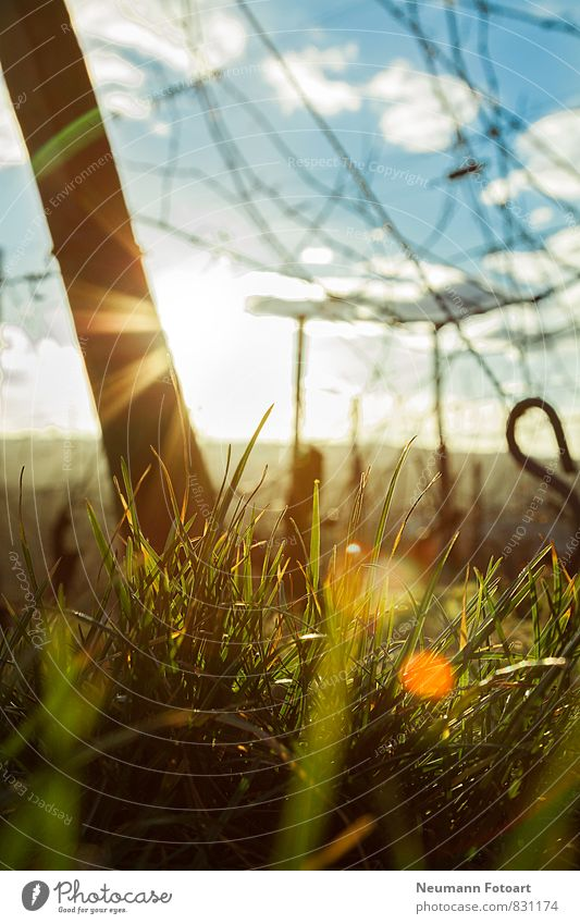Look to the Sun Nature Landscape Earth Sunrise Sunset Sunlight Spring Beautiful weather Plant Grass Lie Looking Blue Yellow Green Lens flare Colour photo