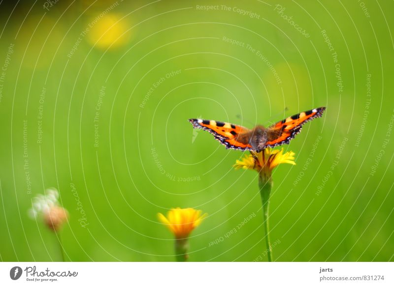 summer dress Nature Plant Animal Summer Beautiful weather Flower Grass Meadow Wild animal Butterfly 1 Flying Wait Natural Serene Patient Calm Colour