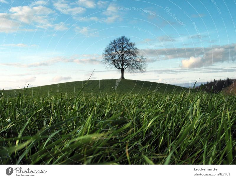 dream tree Tree Clouds Hill Meadow Grass Switzerland Seasons Far-off places Deciduous tree Tree trunk Environment Green Middle Green space Winter mild winter