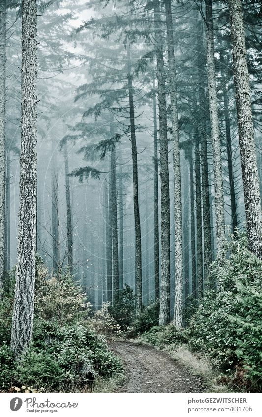 forest path Nature Landscape Autumn Tree Bushes Moss Forest Old Threat Creepy Cold Natural Blue Gray Green Silver Turquoise White Moody Dream Environment