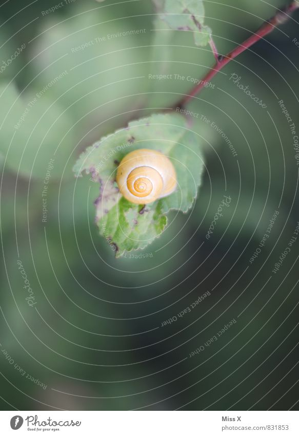 Nature Calm Leaf Animal Moody Snail Patient Snail shell
