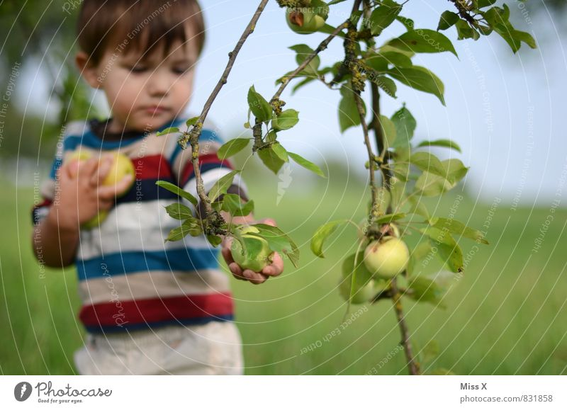 Human being Child Summer Tree Healthy Eating Autumn Garden Food Leisure and hobbies Fruit Infancy Fresh Nutrition Cute