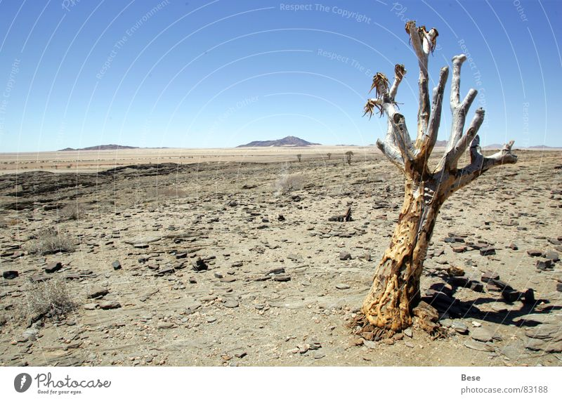Old Tree Loneliness Stone Gloomy Africa Desert Thin Dry Namibia