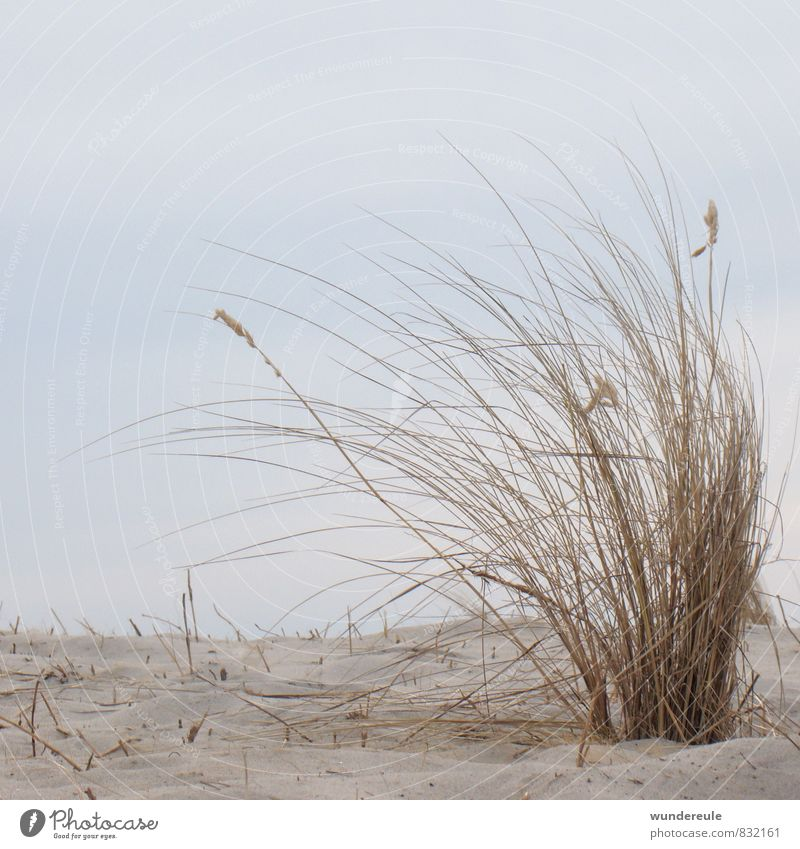 by the wind Environment Nature Landscape Plant Earth Sand Sky Wind Drought Grass Wild plant Coast Baltic Sea Ocean Natural Dry Climate Dream Marram grass