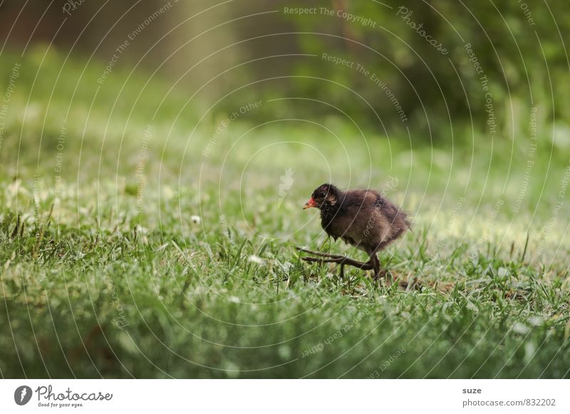 After me, the Flood Nature Animal Grass Meadow Wild animal Bird 1 Baby animal Running Movement Authentic Small Funny Natural Cute Speed Brown Green