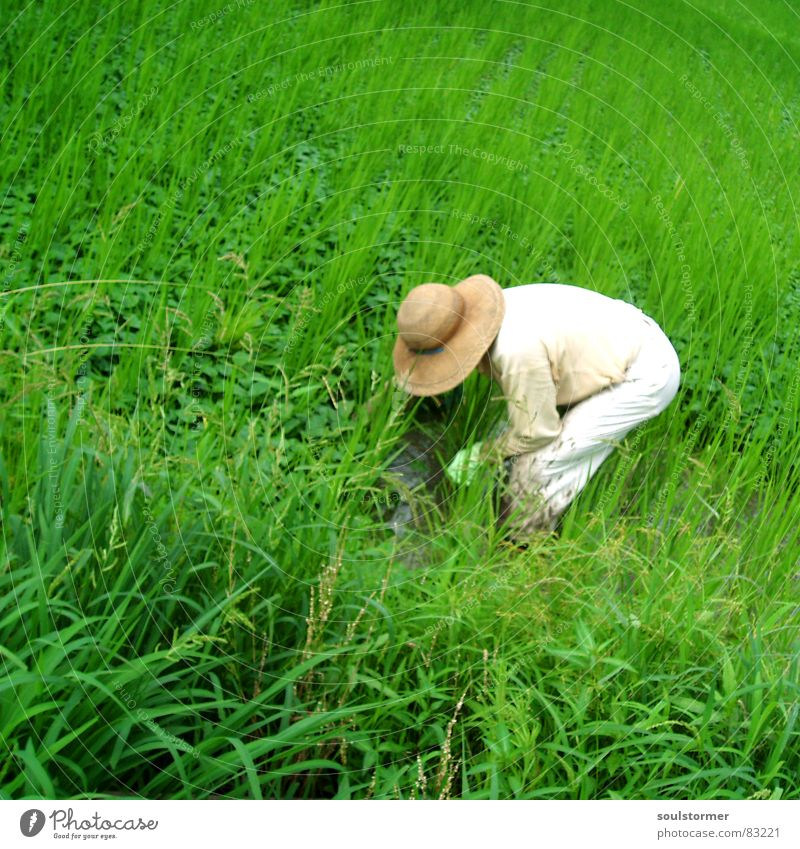 Give me Rice Paddy field Planter Grass Green Japan Asia Exterior shot Vacation & Travel Meadow Nutrition Green space Effort Farmer Overwork Grassland Overburden