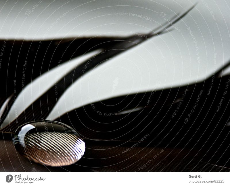 Love pearl, fat Magnifying effect Drops of water Stick Surface tension Delicate Brown Transparent Hydrophobic Round Feather Macro (Extreme close-up) Marble