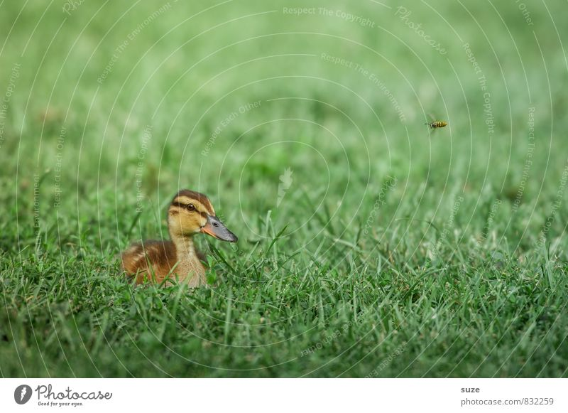 She saw it coming ... Summer Environment Nature Animal Spring Weather Grass Meadow Wild animal Bird 1 Baby animal Lie Authentic Small Natural Cute Green