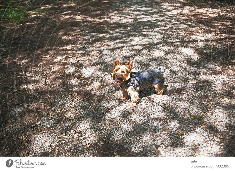 puppy Park Animal Pet Dog Terrier 1 Esthetic Small Colour photo Exterior shot Deserted Day Light Shadow Light (Natural Phenomenon) Animal portrait Looking