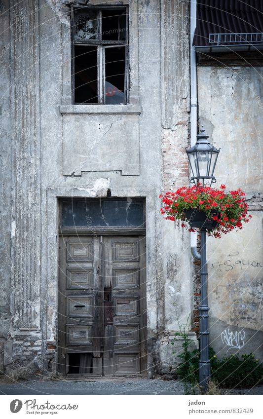 Old Plant Flower House (Residential Structure) Wall (building) Architecture Wall (barrier) Style Lamp Lifestyle Flat (apartment) Living or residing Door