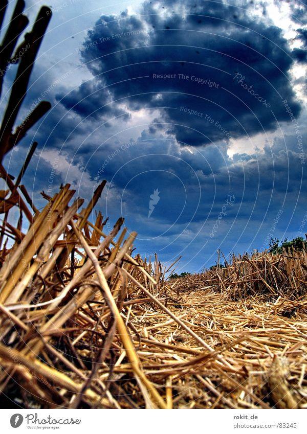 Blue Clouds Dark Death Rain Earth Field Fear Small Fog Blaze Fire Floor covering Threat Grain
