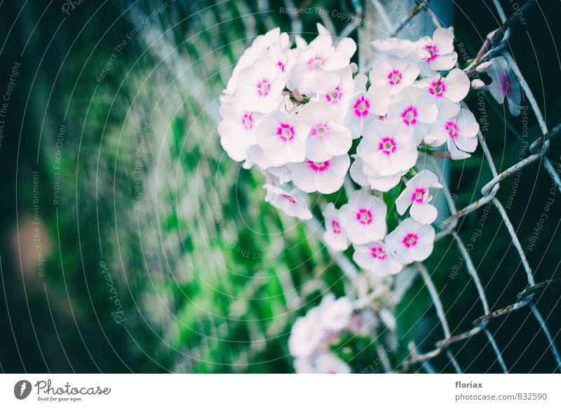 Nature Plant Green White Summer Flower Environment Wall (building) Life Emotions Wall (barrier) Happy Garden Moody Pink Park