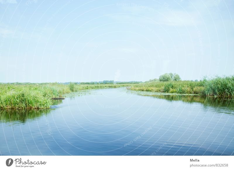 Caution - devil inside Environment Nature Landscape Animal Water Sky Summer River bank Bog Marsh Natural Blue Green Relaxation Horizon Calm Waterway Common Reed