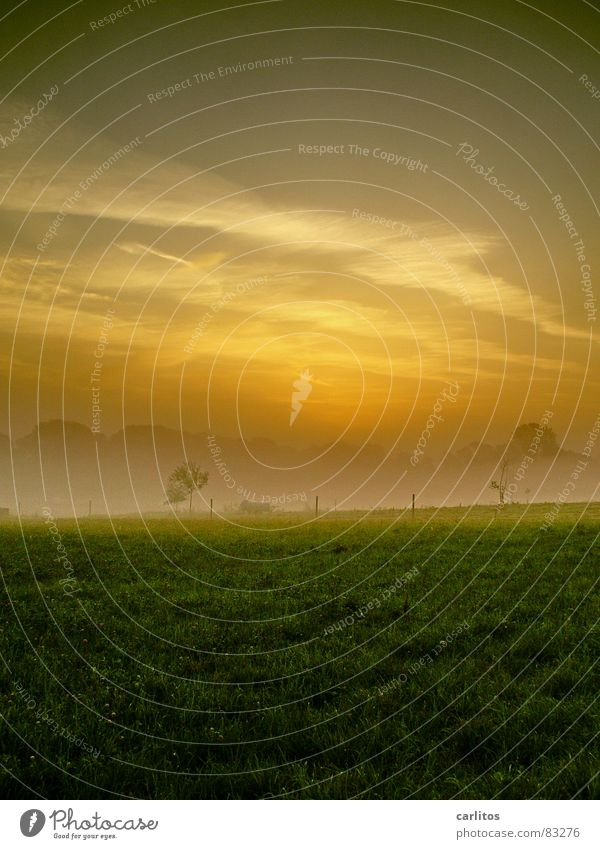 in the country Morning fog Fog Meadow Fence Haze Clouds Colorless Light Grass Shroud of fog Vail Sunrise Green Autumn Dawn Rope Pasture Sky