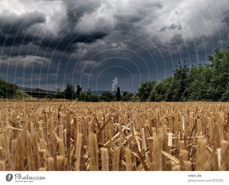 The Grim Reaper was there... Field vole Storm Thunder Straw Dark Clouds Bury Thundery shower Rain Earth Flash in the pan Seed Furrow Subsoil Drone Ignite