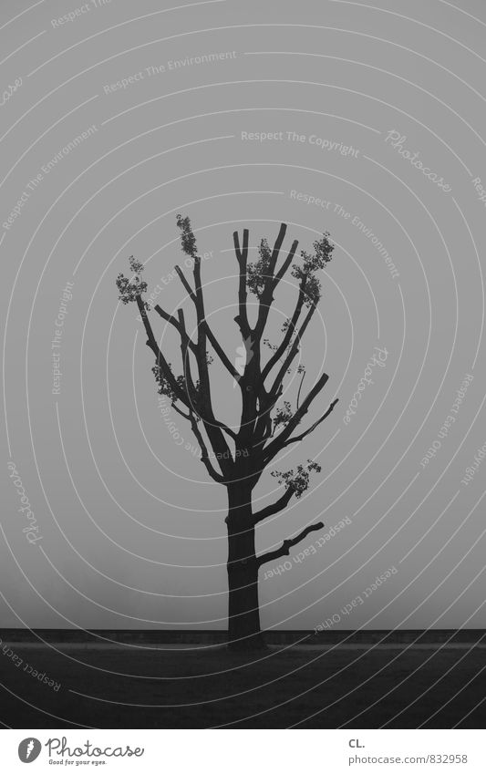fog Environment Nature Landscape Fog Tree Gloomy Gray Calm Sadness Longing Wanderlust Loneliness Tree stump Tree trunk Black & white photo Exterior shot