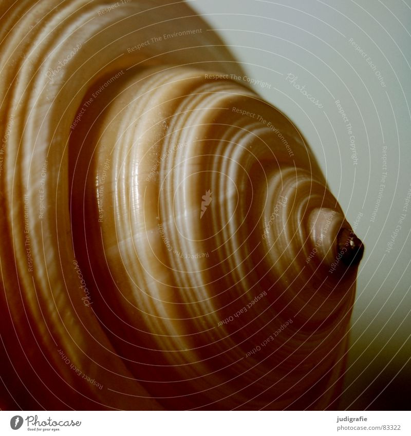 home Snail shell Mussel Ocean Brown Yellow Black House (Residential Structure) Safety (feeling of) Spiral Rotated Bobbin Harmonious Calm Ton snail
