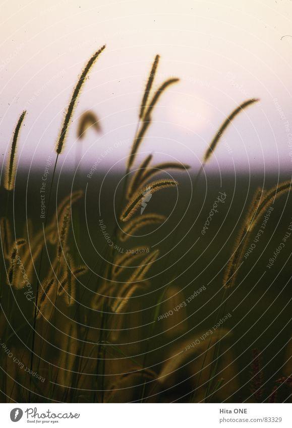 Nature Green Meadow Grass Horizon Lawn Romance Pasture Blade of grass Dusk Half Grassland Wilderness Green space