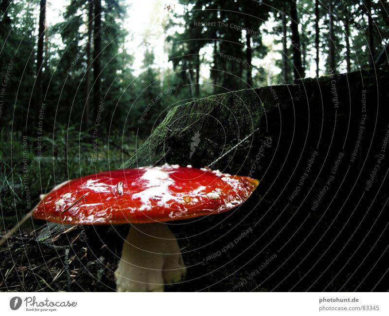 Forest Dark Wood Mysterious Poison Caution Woodground Wood flour Tree stump