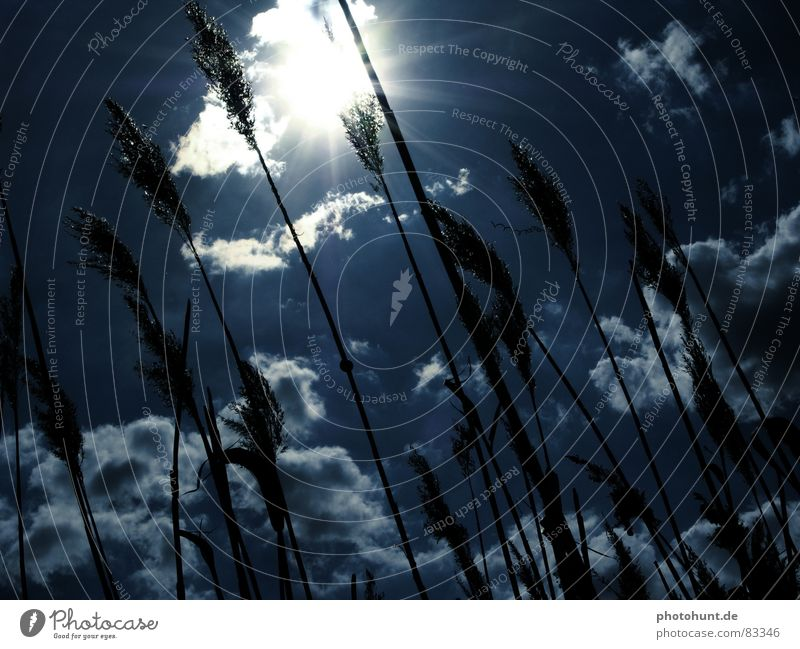 blue sky Sky Clouds Sunbeam Back-light sunbeams snail heaven reed
