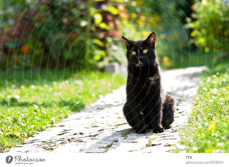 Cat Nature Plant Green Landscape Animal Environment Grass Lanes & trails Garden Glittering Weather Elegant Contentment Bushes Wait